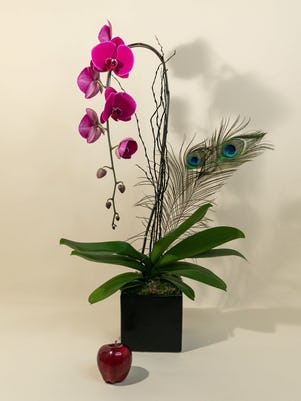 Single Purple Phalaenopsis Orchid Planter