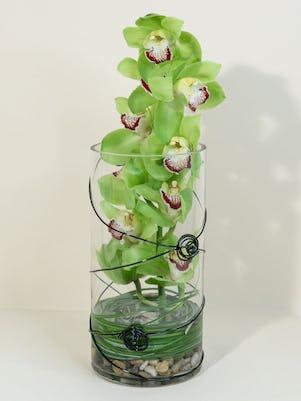 A Cymbidium Orchid Desktop Garden