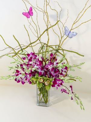 Purple Dendrobium Orchid Majesty