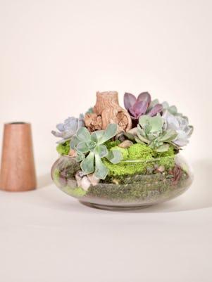 Small Succulent Garden-Clear Glass