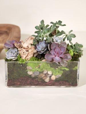 Medium Succulent Garden-Clear Glass