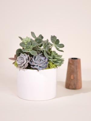 Small Succulent Garden-White Ceramic