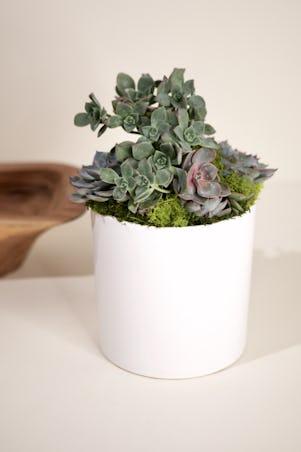 Medium Succulent Garden-White Ceramic