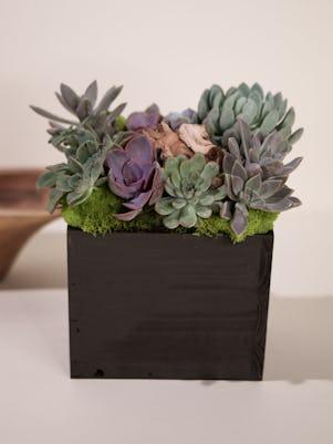 Medium Succulent Garden- Wooden Box