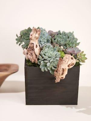 Large Succulent Garden-Wooden Box