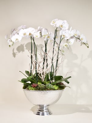 Bowl of 6 White Phalaenopsis Orchids