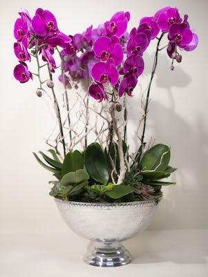 Bowl of 6 Purple Phalaenopsis