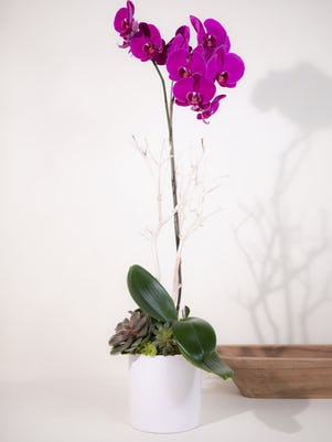Single Purple Phalaenopsis Orchid- White Ceramic