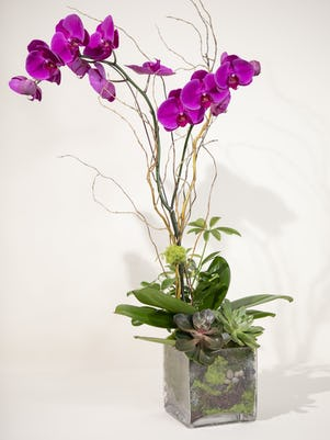 Single Purple Orchid-Clear Glass