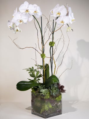 Double White Phalaenopsis Orchids-Clear Glass Vase